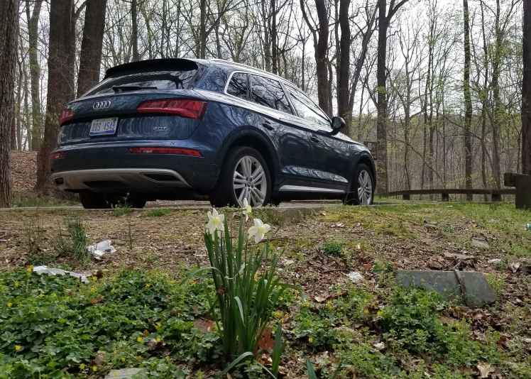 2018 Audi Q5 in Rock Creek Park with Dafodils