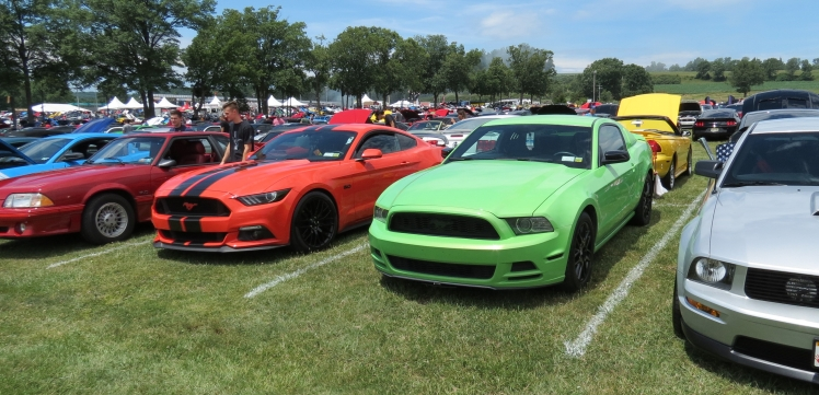Ford Mustangs of every color at American Muscle Mustang Show 2019
