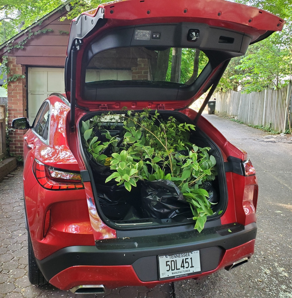 Infiniti QX55 in red with plants in the cargo space